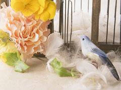 福岡の結婚相談所の画像